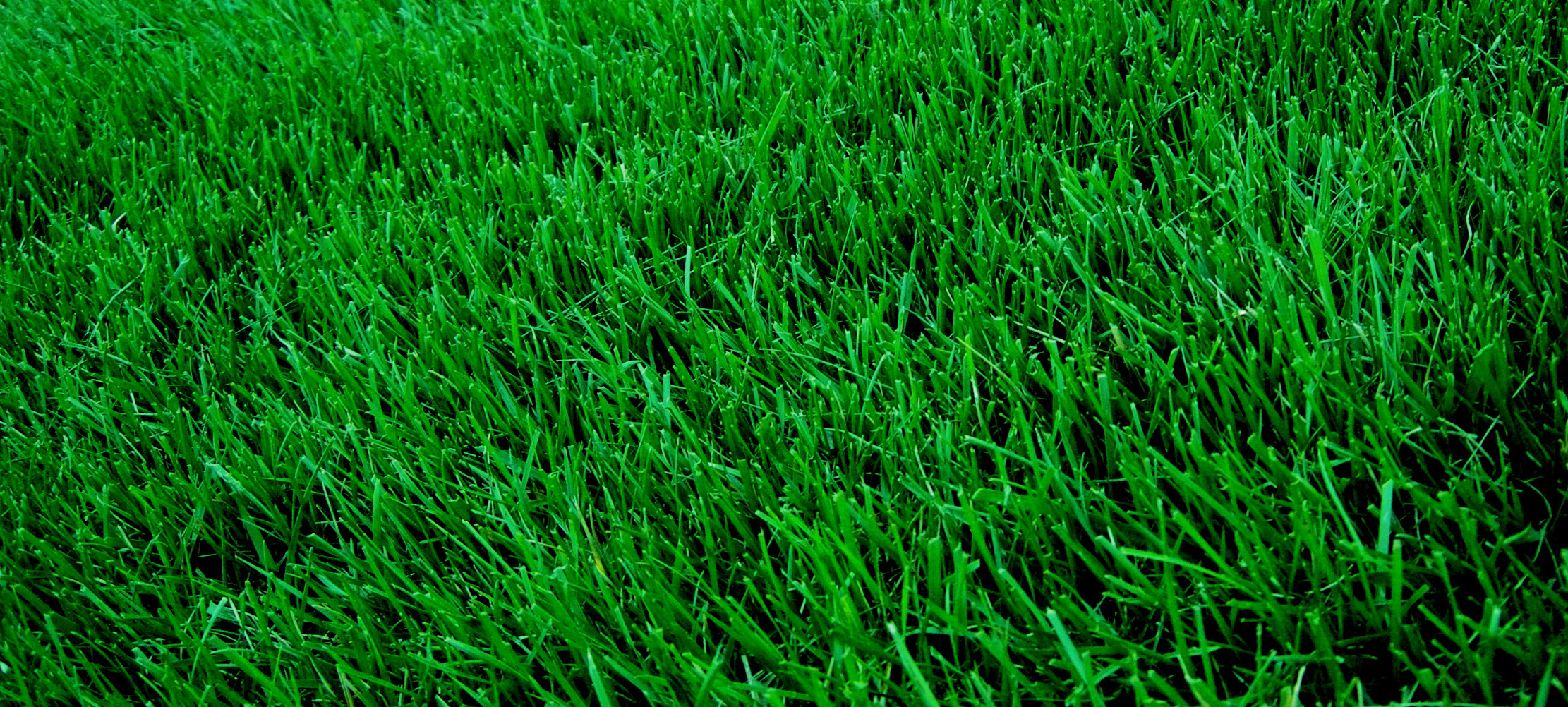Professional Lawn Care for Columbia MO & Surrounding Communities